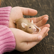 iStock_MouseHandFeatured