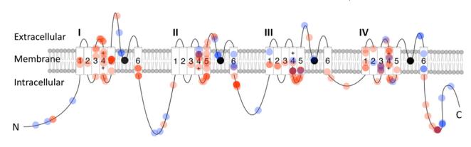 SCN2A-lead-image